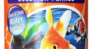 Best food for Goldfish